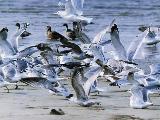 Bird gull of city
